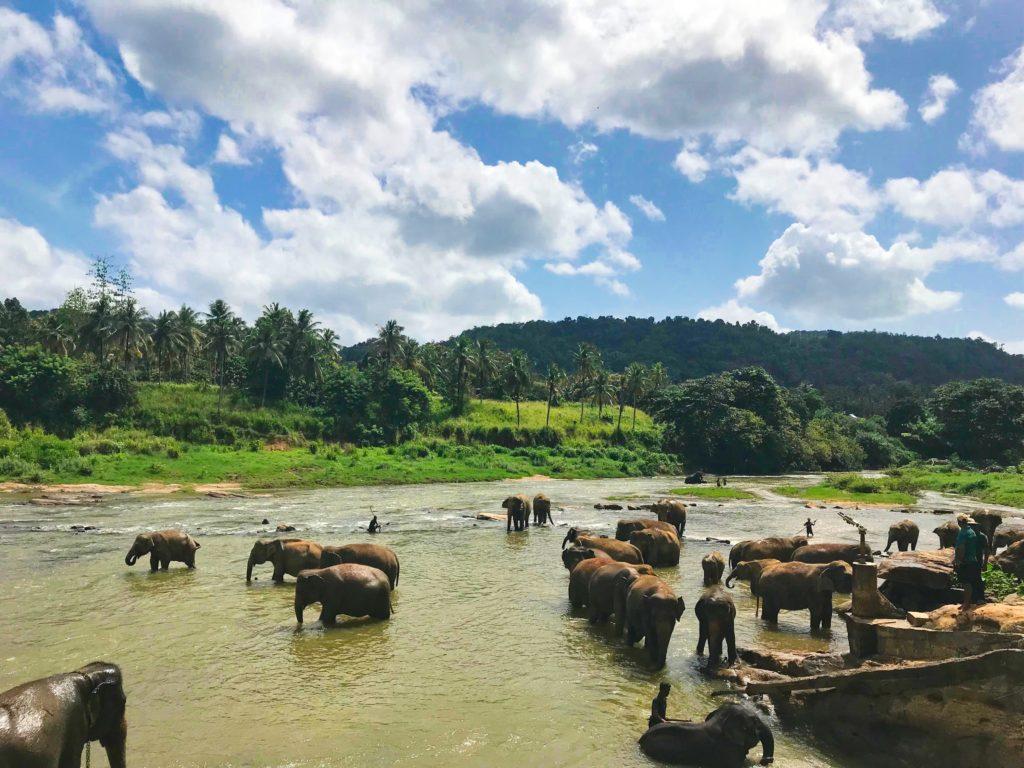 Die Schmetterlingsinsel Corina Bomann Ceylon Sri Lanka